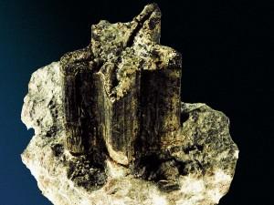 Der Seestern Trichasteropsis (Durchmesser 45 mm) sitzt auf einem 53 mm hohen Stylolithen.