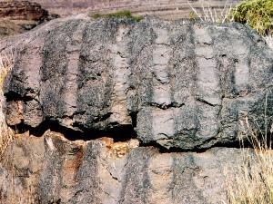 In Namibia sind Stromatolithen zu hoch aufragenden Mauern emporgewachsen.