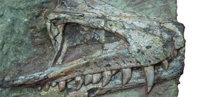 11-Archosaurier-Kopie